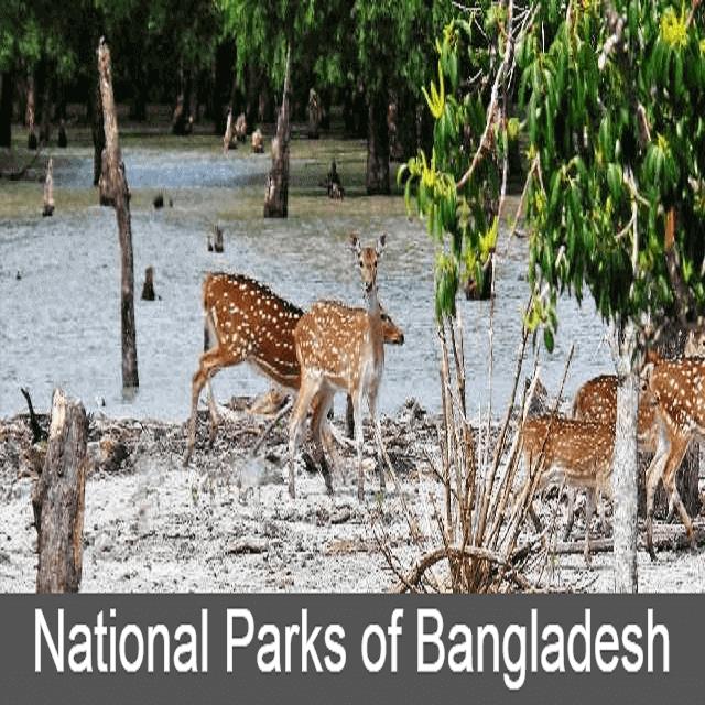 National Parks in Bangladesh