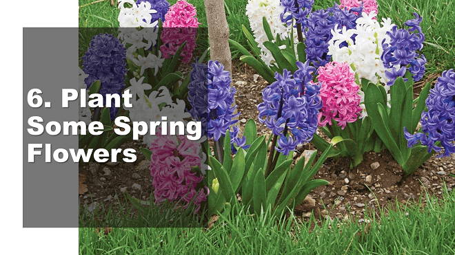 Plant Some Spring Flowers - How to Celebrate May Day - Mr. BD Guide